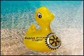 duck race  Duck Race